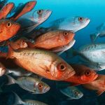 Salvando os peixes