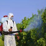 Agrotóxicos: perigo vivo!