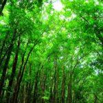 Florestas são estratégia viável para sequestro de carbono