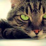 Transformando gatos em combustível