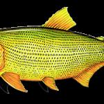 Cheiro de peixe