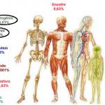 Corpo Humano e os elementos químicos